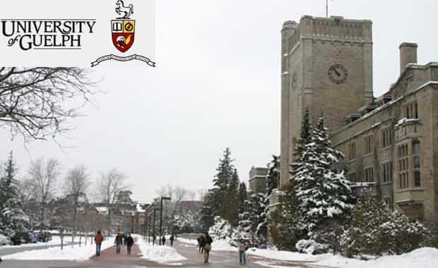منحة جامعة غيلف لدراسة البكالوريوس في كندا 2021