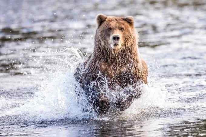 قدم إلى مسابقة The Animal Planet للصور واربح جائزة بقيمة 1200 دولار أمريكي من ViewBug لعام 2021